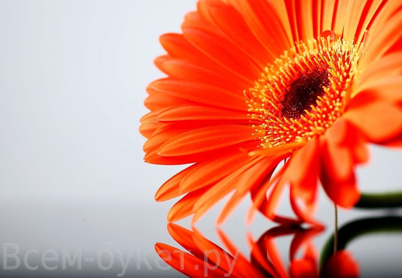 О чём молчат цветы